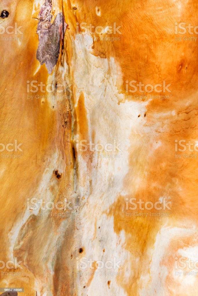 orange bark of eucalyptus zbiór zdjęć royalty-free