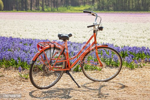 Orange bicycle next to a field of hyacinths. Dutch spring landscape - Image