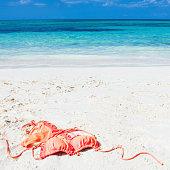 istock Orange Bikini on the Beach in the Bahamas, Caribbean 1203825788