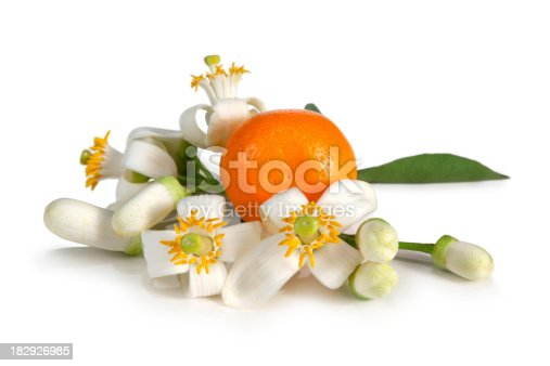 Orange Blossoms