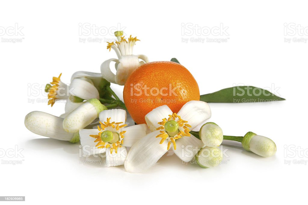 Orange Blossoms stock photo