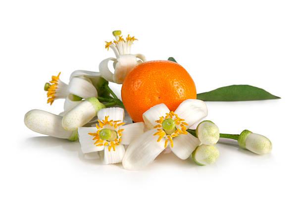 orange blossoms - orange fruit stock photos and pictures