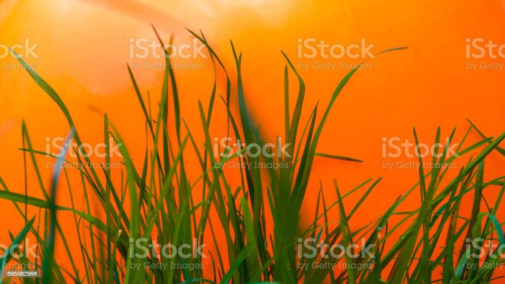 Orange, blue & green Lizenzfreies stock-foto