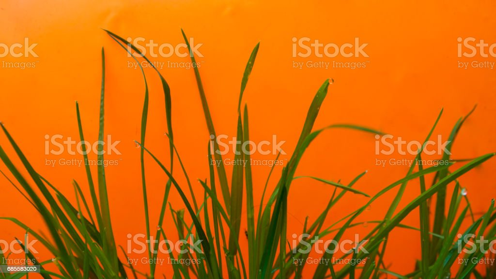 Orange, blue & green royalty-free 스톡 사진