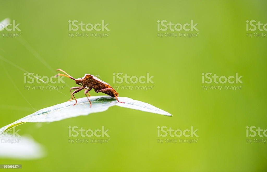 Orange Bug royalty-free stock photo