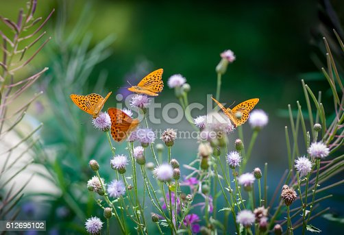 istock Orange butterflies drinking nectar on a green floral backgroung 512695102