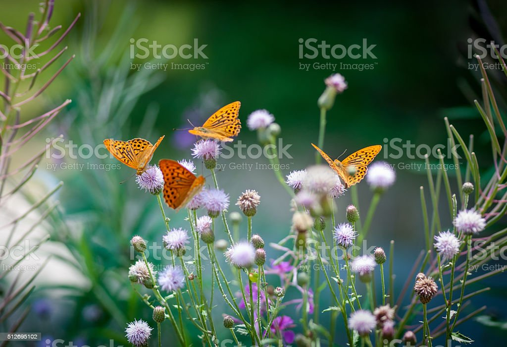 Orange butterflies drinking nectar on a green floral backgroung stock photo