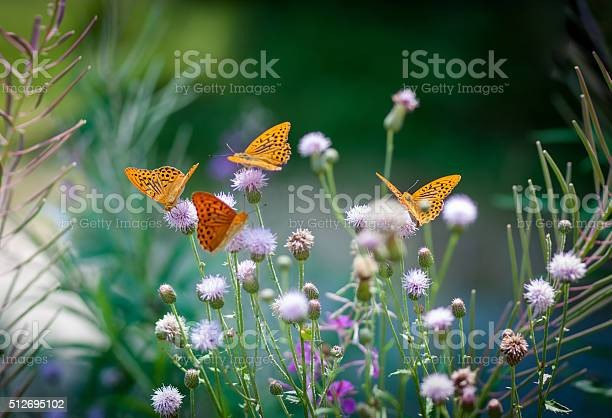 Photo of Orange butterflies drinking nectar on a green floral backgroung