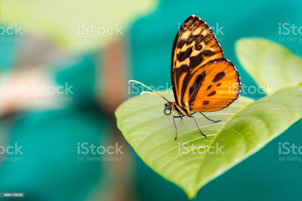 Papillon orange bouchent photo libre de droits