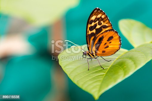 istock Orange Butterfly Close Up 896416538