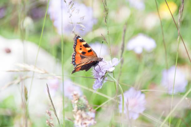 Orange butterfly gathering pollen of purple flowers in green field picture id1027169804?b=1&k=6&m=1027169804&s=612x612&w=0&h=q9 w qn7csgax8hzgbwv5c4ajruyz1qo0knbs8vghdw=