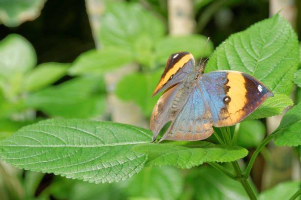 Orange Schmetterling vor grünem Hintergrund – Foto