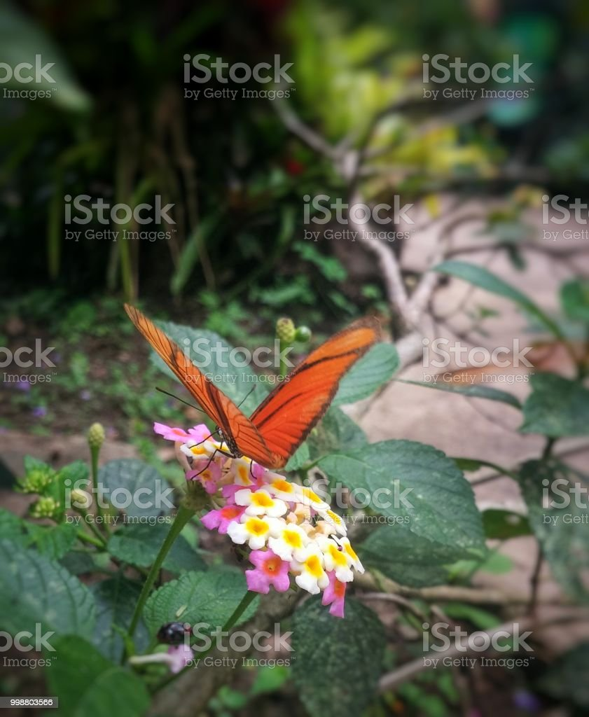 Orange Butterfly Perched On Small White And Pink Flowers Stock Photo