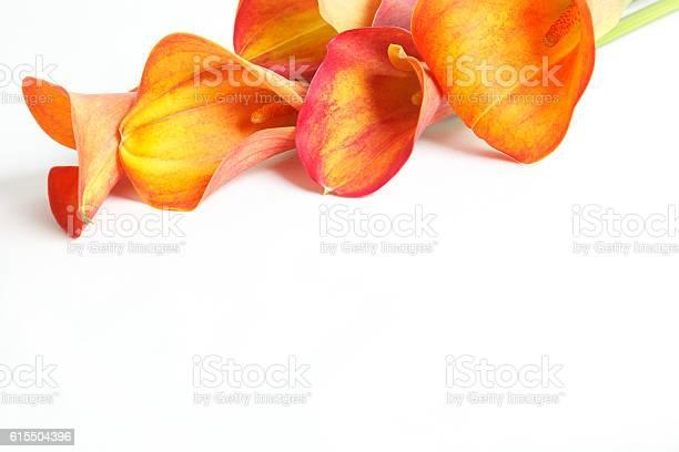 Orange calla lilies isolated on white background picture id615504396?b=1&k=6&m=615504396&s=612x612&h=waugo077va6kpaew4n6vq3qubrrs1ioajnbwgfdfeue=