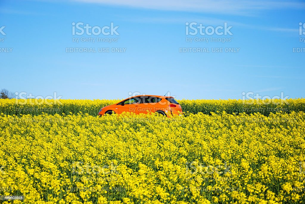 Orange car in yellow field stock photo