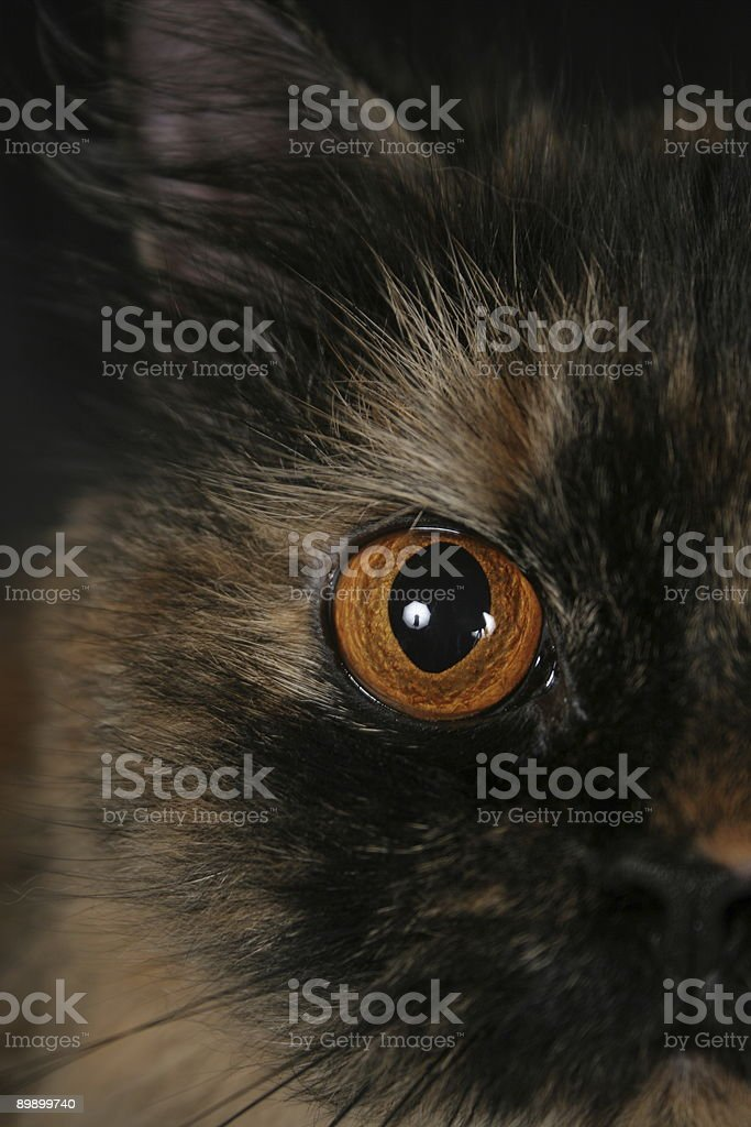 Orange Cat Eye royalty-free stock photo