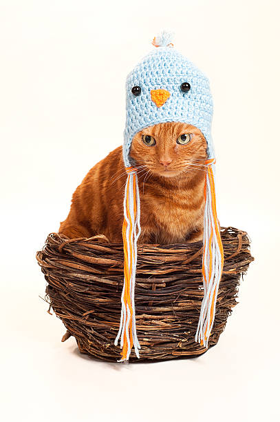 orange katze in einem extragroßen wie ein vogel-nest - katzenhüte häkeln stock-fotos und bilder