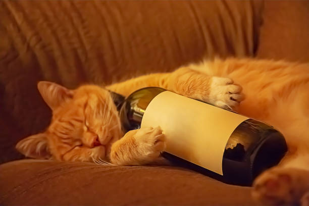 Orange cat lying on the couch in an embrace with a bottle of wine. Ginger cat stock photo