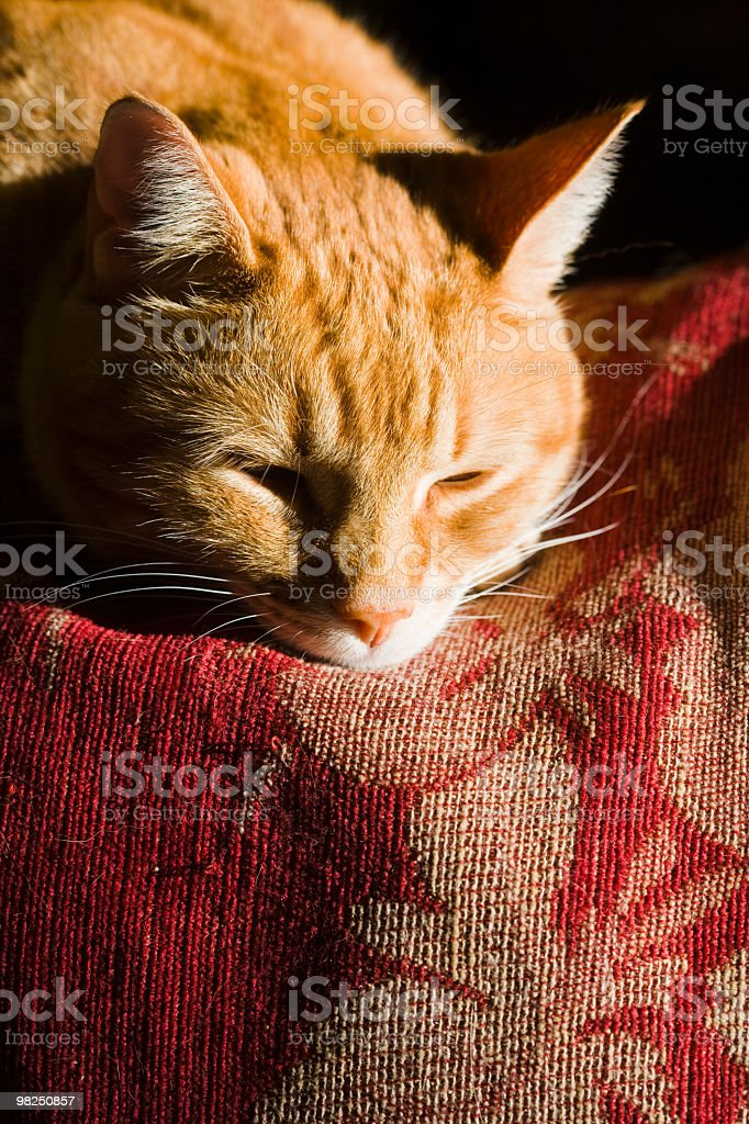 Orange Cat royalty-free stock photo