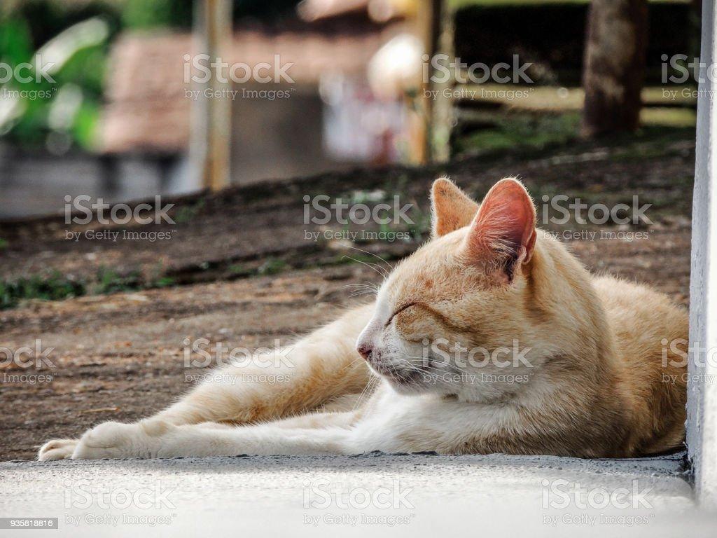 Orange Cat Sleeping on the Sidewalk stock photo