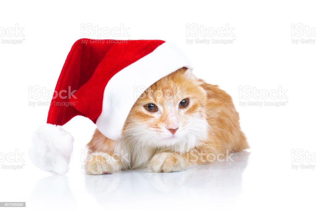orange cat wearing santa claus hat stock photo
