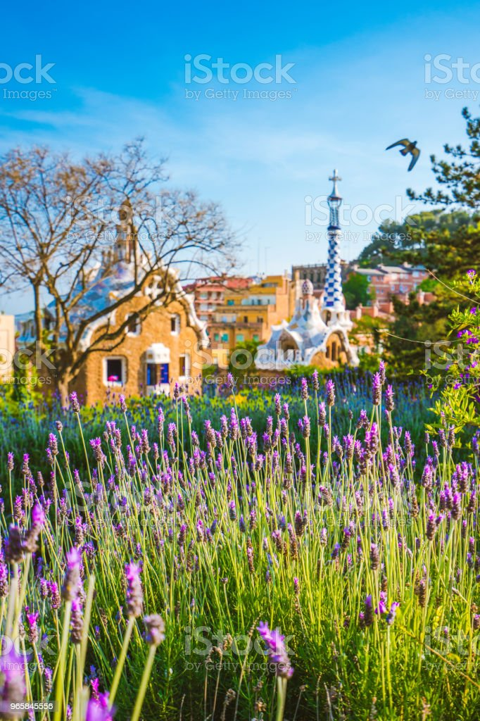 Orange colored mosaic building in Park Guell. Violet lavender flower blossom in foreground. Barcelona, Spain - Royalty-free Antoni Gaudí Stock Photo