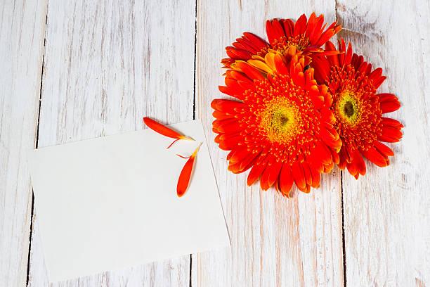 orange farbigen gerbera Blumen – Foto