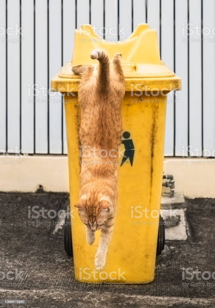 ginger cats jumping from orange colour recycle bins