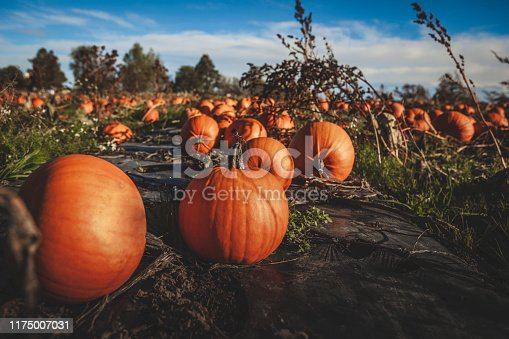 istock Orange Coloured Pumpkin 1175007031