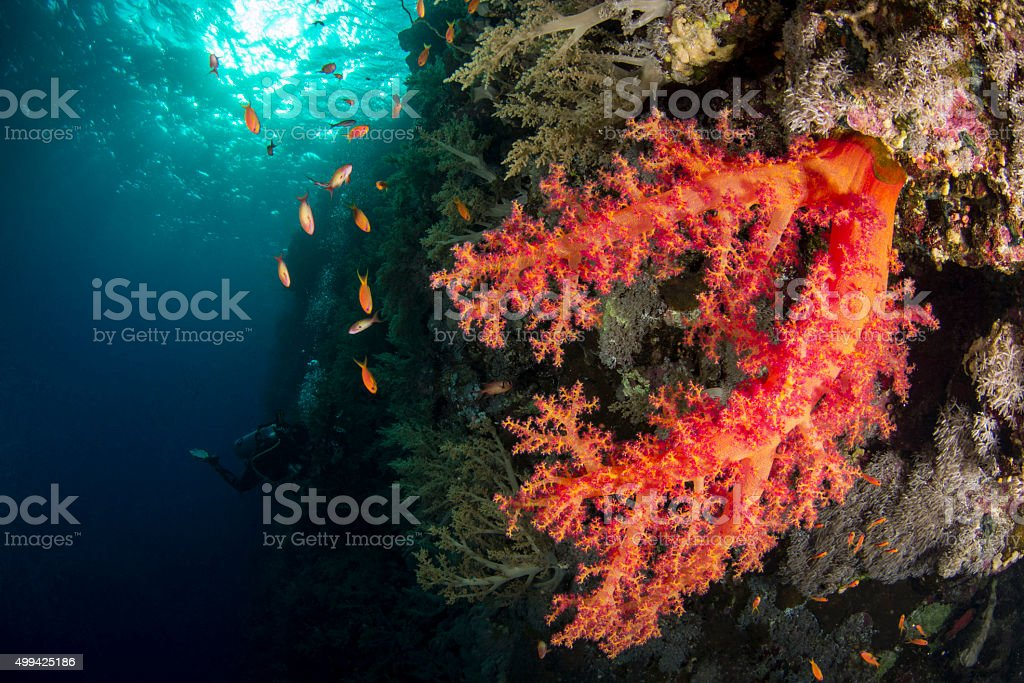 Orange Coral stock photo