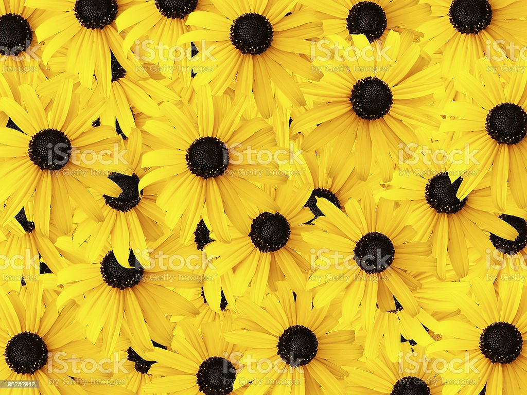 Orange Daisies Background royalty-free stock photo