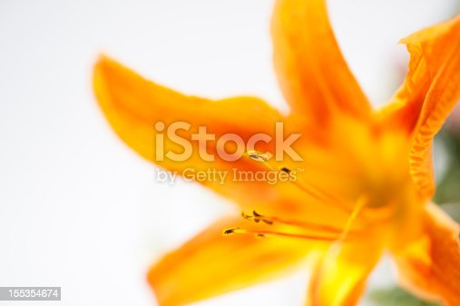 A macro capture with the focus on the stamen of a blooming orange and yellow day lily.