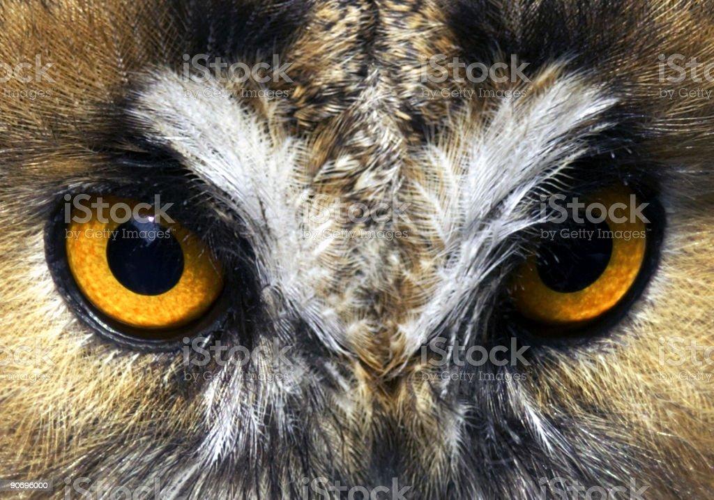 Orange Eagle Owl Eyes royalty-free stock photo