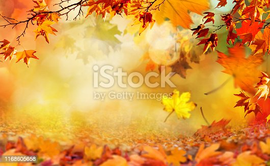orange fall  leaves, autumn natural background