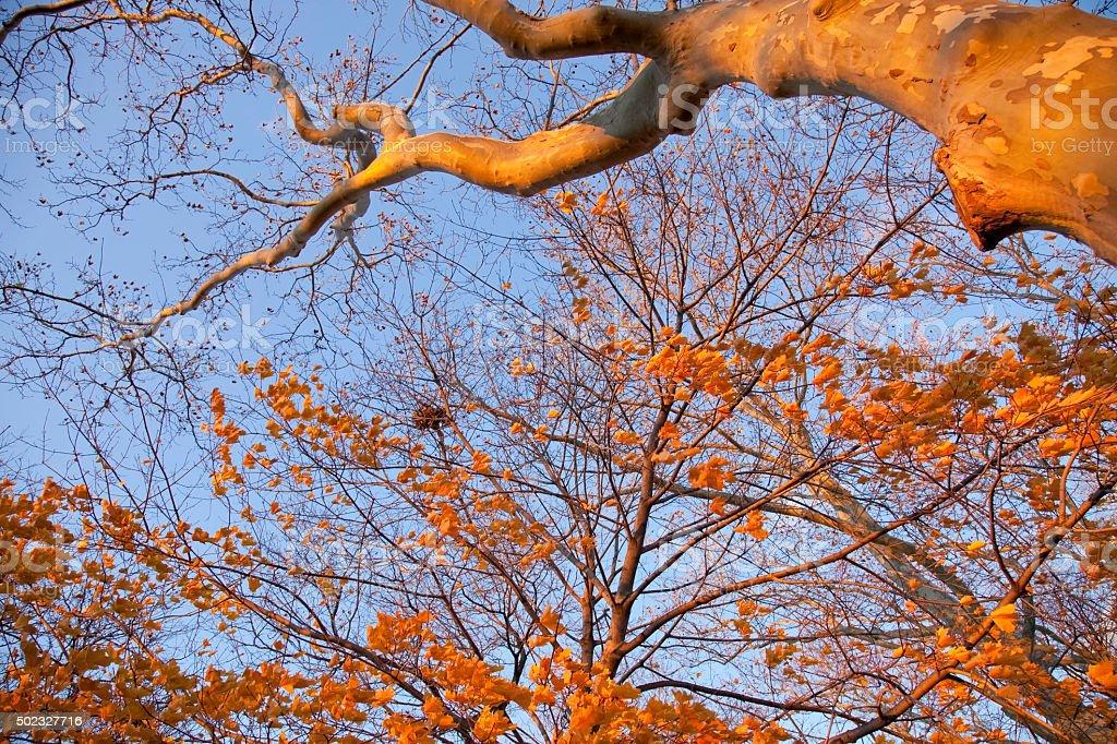 Orange Fall stock photo