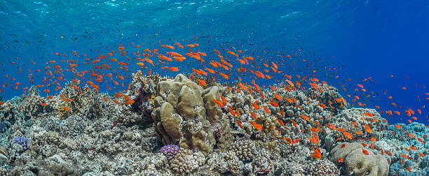 Orange Fish on Coral Reef stock photo