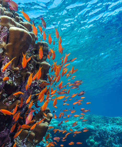 Orange Fish on Coral Reef stock photo