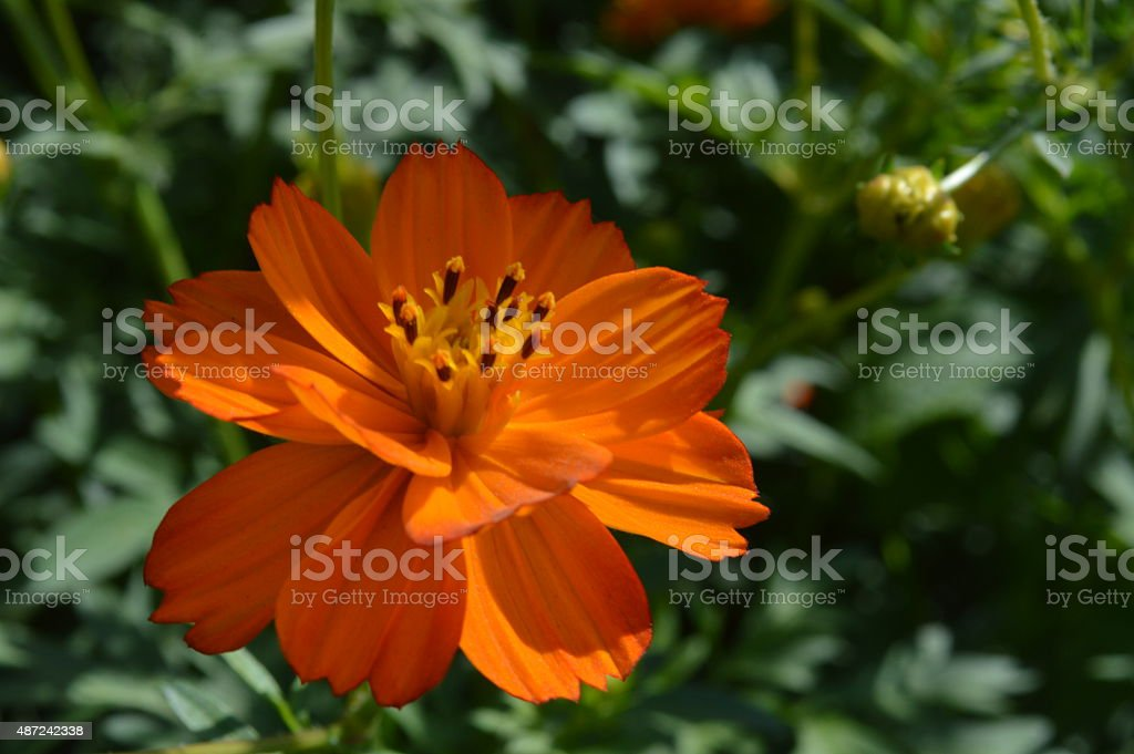 Orange flower close-up stock photo