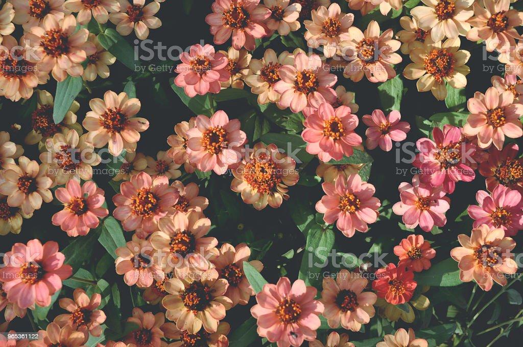 배경에 대 한 주황색 꽃 - 로열티 프리 0명 스톡 사진
