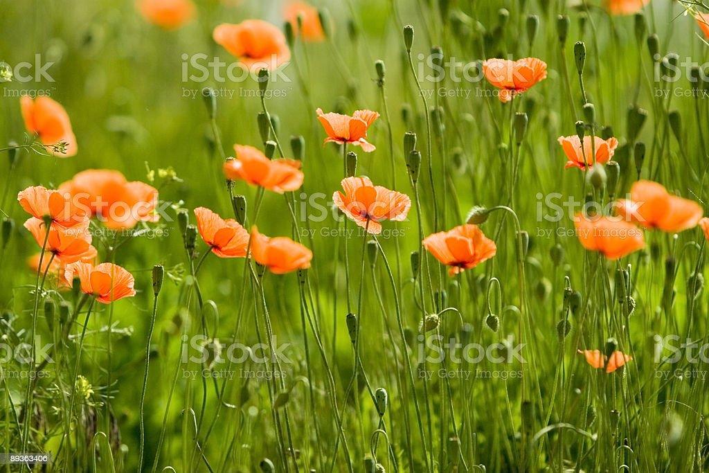 orange flower forest stock photo