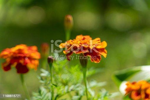 summer flowers grow in the garden. bokeh