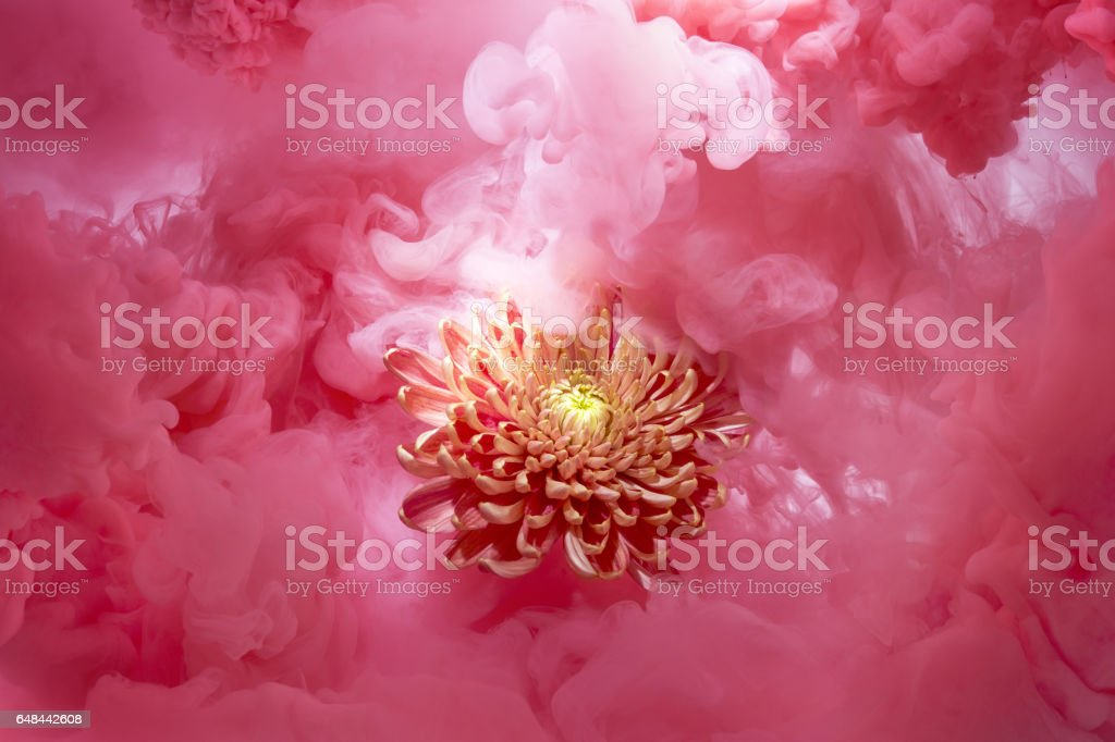 Orange flower in a soft pink cloud stock photo more pictures of orange flower in a soft pink cloud royalty free stock photo mightylinksfo
