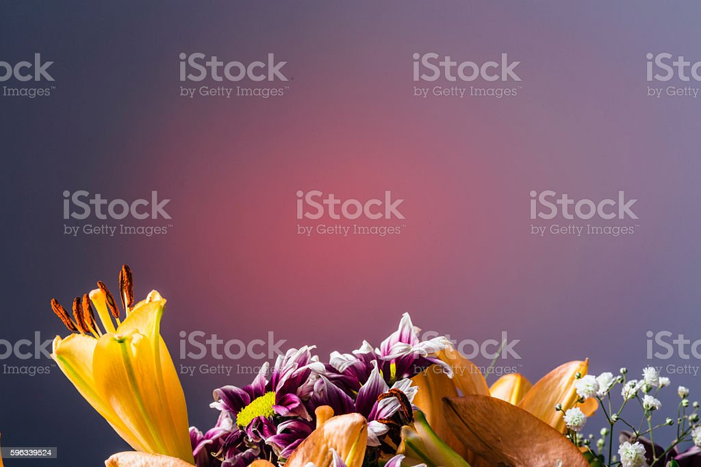 Orange flower in bloom on a smooth pink background Lizenzfreies stock-foto