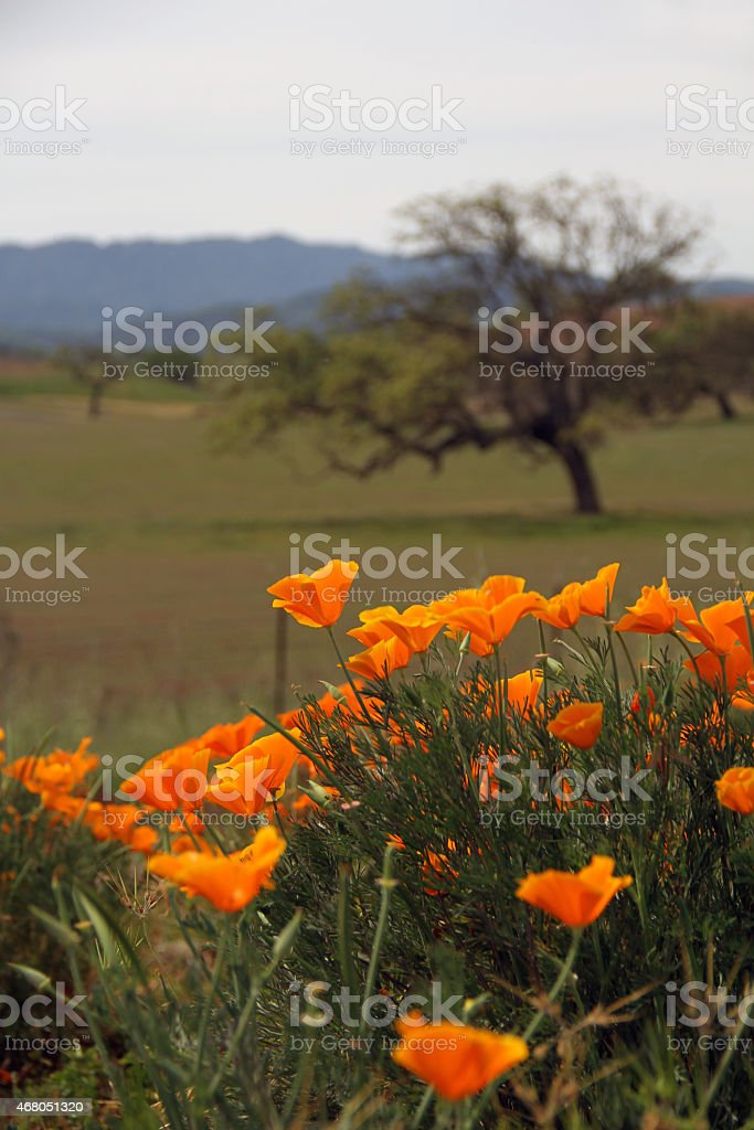 Orange Flower in the Landscape stock photo