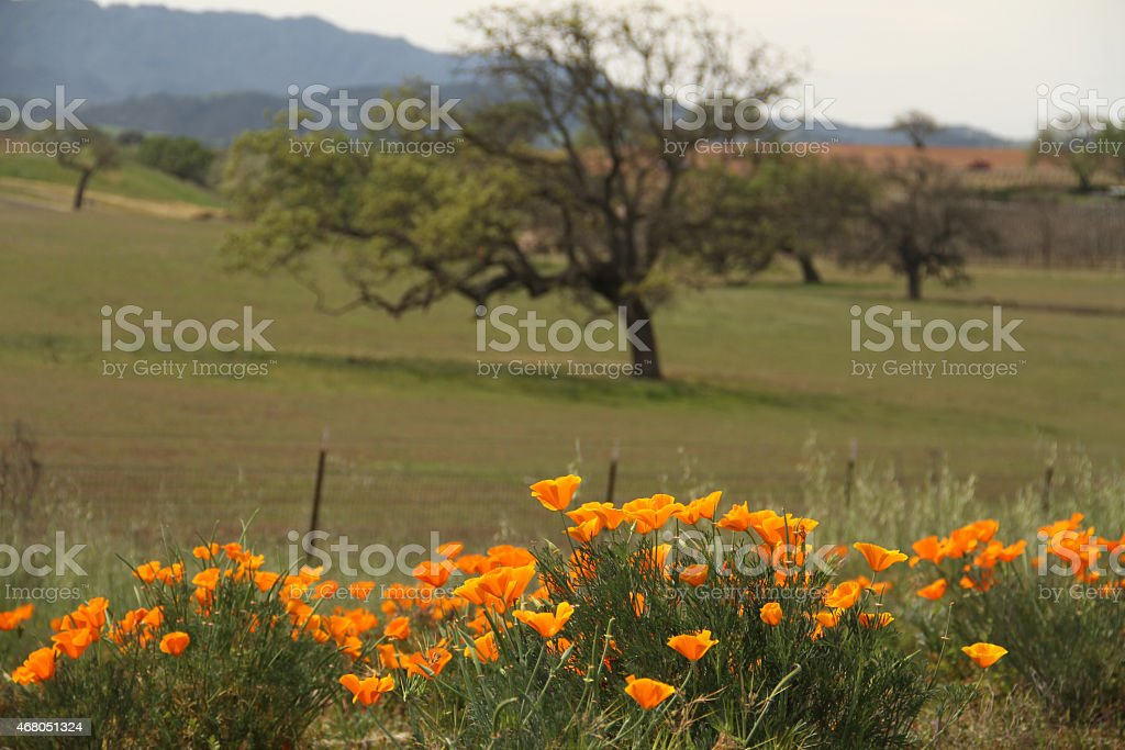 Orange Flower in the Landscape with Mountain and Tree Background stock photo
