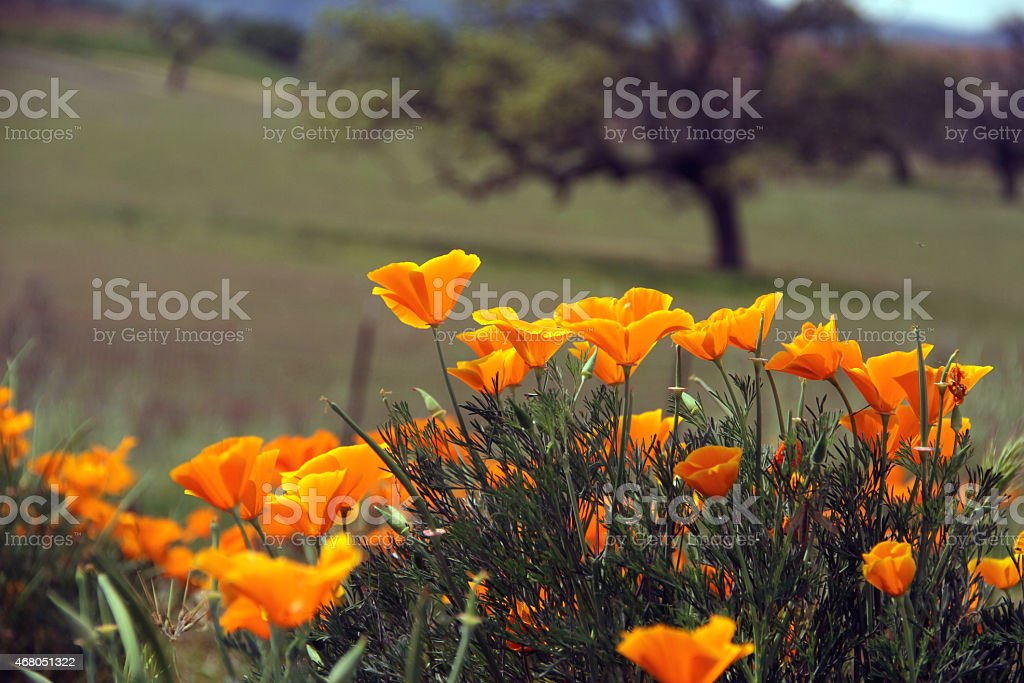 Orange Flower in the Nature stock photo