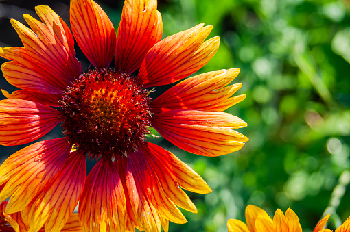 Orange flower in the summer garden. Sets the summer mood. Bright and fresh.