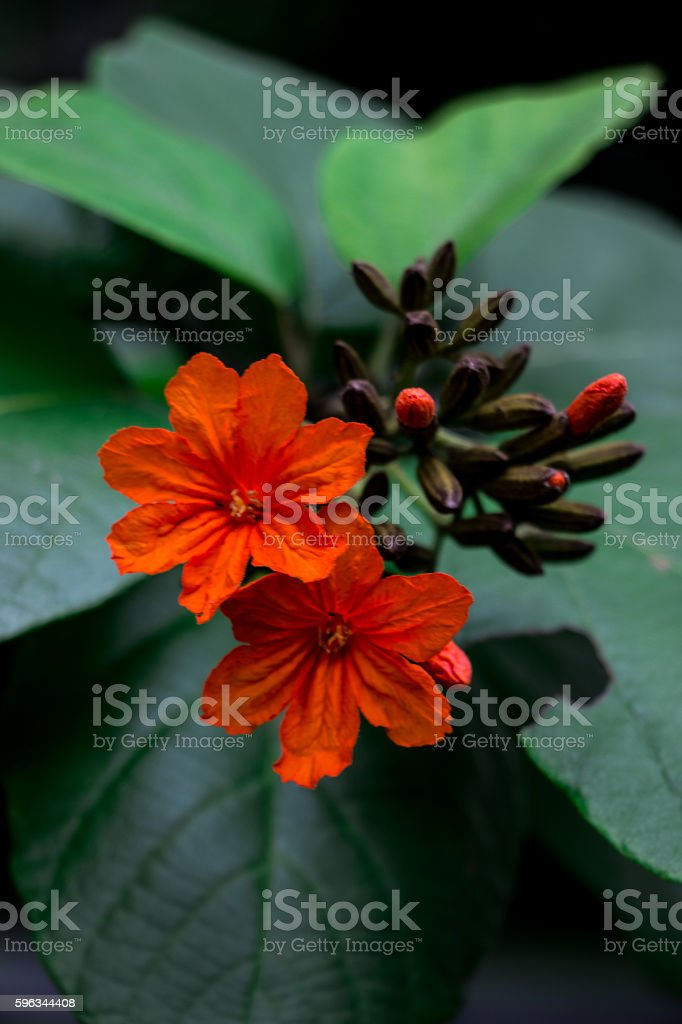 Orange Flower royalty-free stock photo