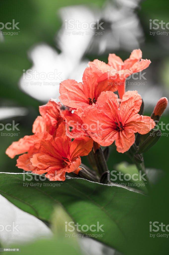 Orange Flower royalty-free stock photo