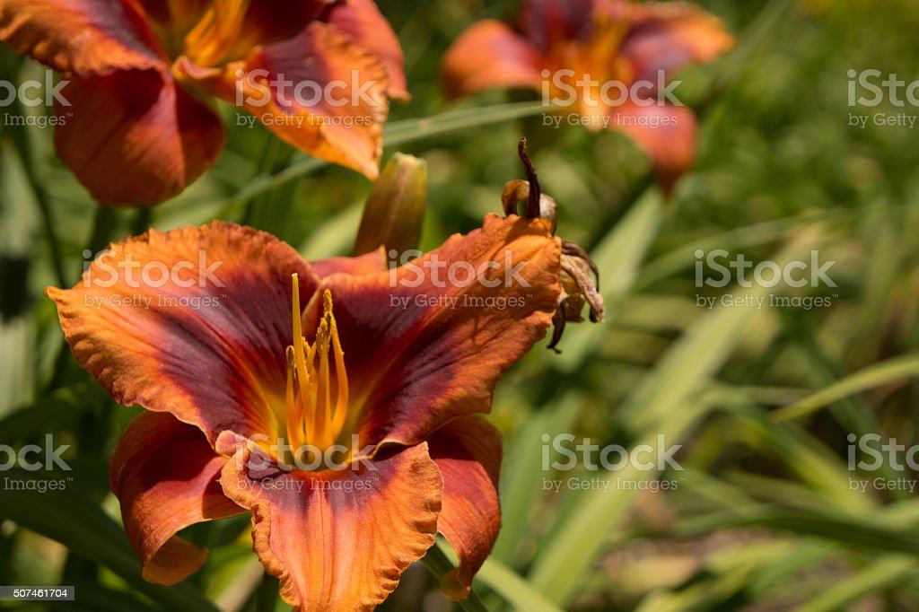 Orange flower with bee stock photo